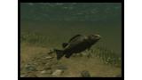 スーパーブラックバスX2 ゲーム画面12