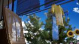 サマーレッスン:アリソン・スノウ 七日間の庭(基本ゲームパック) ゲーム画面5