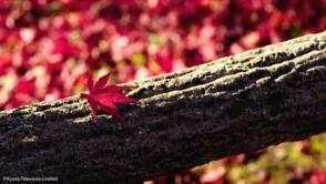 日本驚嘆百景 京都〜美しき紅葉の秘密〜_gallery_3