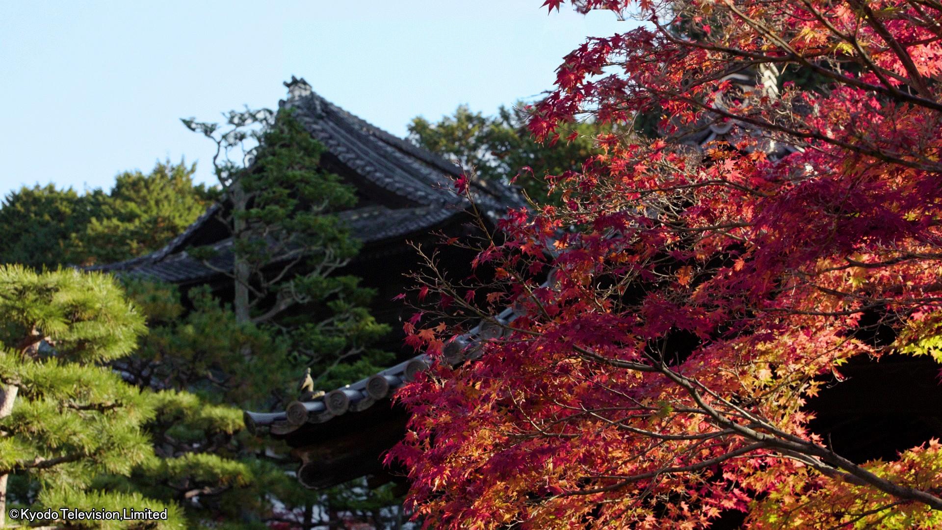 日本驚嘆百景 京都〜美しき紅葉の秘密〜_body_1
