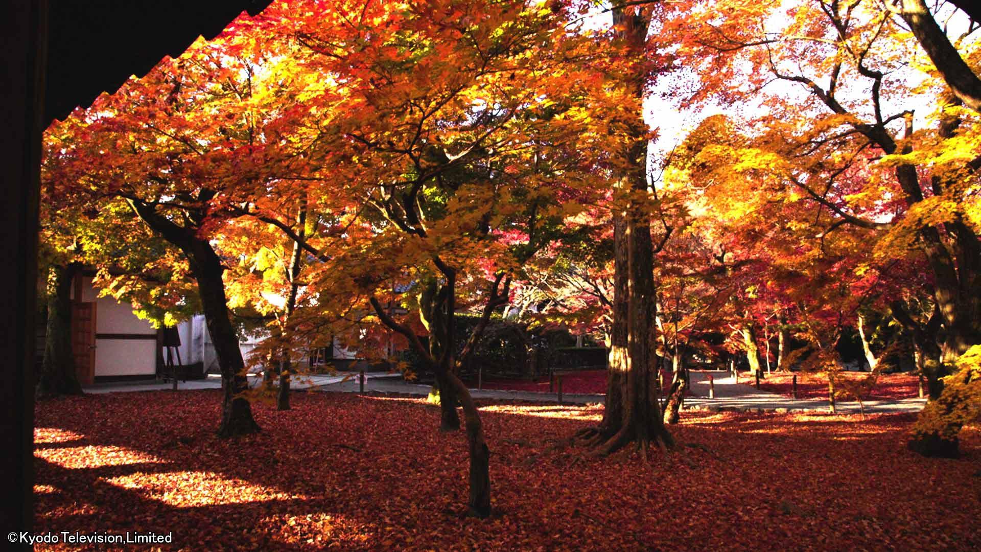 日本驚嘆百景 京都〜美しき紅葉の秘密〜_body_3